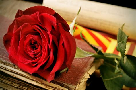 St George's Day Barcelona Rose and Book Festival
