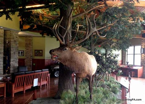 UncoveringPA | Discovering Pennsylvania's Elk Herd at the