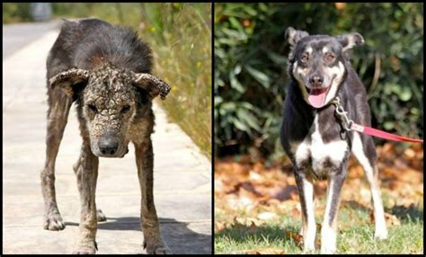 Before After - Ten Rescue Dogs That Came Back To Life
