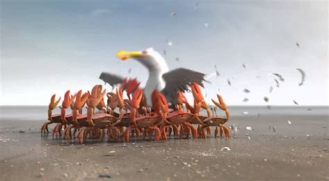 It's smarter to travel in groups - Seagull and Crabs - YouTube