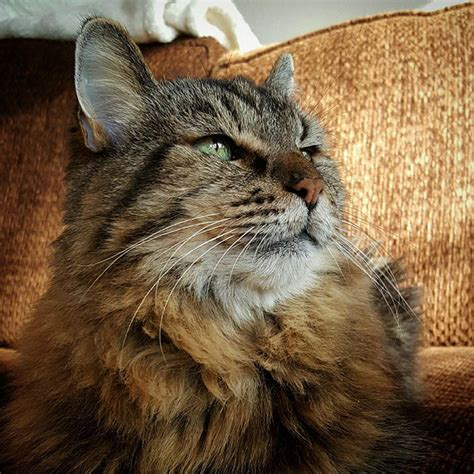 Meet The World's Oldest Cat Aged 26 Who Was Adopted From A