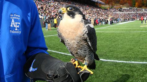 Air Force Mascot, a Falcon, Is Injured by West Point